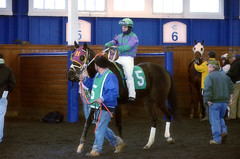 "2017-03-31 (33) r4 Horacio Karamanos on #5 American Progress (JLeeFleenor) Tags: photos photography md maryland marylandracing marylandhorseracing laurelpark horseracing jockey جُوكِي ""赛马骑师"" jinete ""競馬騎手"" dżokej jocheu คนขี่ม้าแข่ง jóquei žokej kilparatsastaja rennreiter fantino ""경마 기수"" жокей jokey người horses thoroughbreds equine equestrian cheval cavalo cavallo cavall caballo pferd paard perd hevonen hest hestur cal kon konj beygir capall ceffyl cuddy yarraman faras alogo soos kuda uma pfeerd koin حصان кон 马 häst άλογο סוס घोड़ा 馬 koń лошадь"