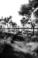 White Heat in the Outback (mr_m_tom) Tags: nikon bw outback trees