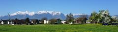 Liechtenstein (Hellebardius) Tags: liechtenstein principalityofliechtenstein fürstentumliechtenstein alpen schnee berge mountains alpine alps frühling springtime baumblüte blushing