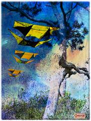 Kites (geoffspix) Tags: kite tree texture grunge artistic fly wind soar fantasy modified