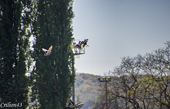 Attendez-moi j'arrive... (Crilion43) Tags: arbres france paysage ciel canard oiseaux vichy allier auvergne cane caneton corbeau corneille eau herbe merle nuages parc pigeon rivière