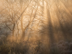 A Moment (Damian_Ward) Tags: damianwardphotography ©damianward damianward clumberpark nottinghamshire woodland mist frost morning rays