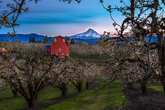 Early Spring in Hood River Valley, Oregon (Cole Chase Photography) Tags: hoodriver oregon pearorchard bluehour sunset pacificnorthwest spring