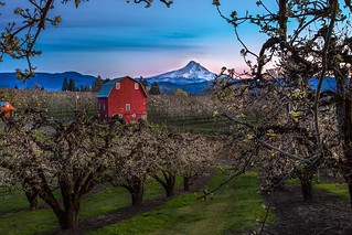 Early Spring in Hood River Valley, Oregon