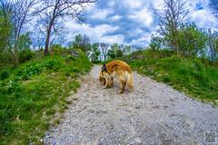 2017-04-15_12-51-40 (der.dave) Tags: 2017 april feste fisheye frühling nachmittag niederösterreich ostern parties peisching wolkig bewölkt nachmittags österreich
