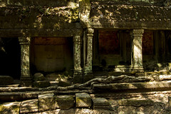 _MG_6750 (gaujourfrancoise) Tags: voyage travel trees nature asia cambodge cambodia roots arbres jungle angkor taprohm racines fromagers gaujour spungs