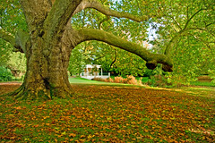 Bough (jimj0will) Tags: autumn building tree fall leaves englishheritage audleyend