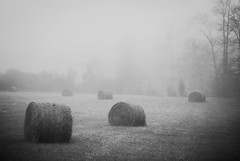 (Leo Hohmann) Tags: blackandwhite monochrome fog landscape nikon farm foggy dreamy agriculture hayfield bucolic fineartphotography grantvillegeorgia cowetacountyga leohohmannphotography beautifulruralscenes