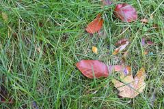 Textur Gras (Skley) Tags: foto gras wald bltter boden nadeln texturen textur fussboden skley