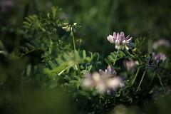 Im Grnen (-Photloos-) Tags: flowers detail canon germany deutschland 50mm stuttgart pflanzen blumen 500d badenwrttemberg detailshots