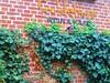 2014-10-20 Kremmen 13 (dks-spezial) Tags: brandenburg oberhavel scheunenviertel kremmen