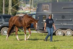 DSC06815_s (AndiP66) Tags: horse oktober macro sports sport schweiz switzerland mark sony luzern sp ii di if alpha tamron concours 77 pferd 70200 equestrian derby f28 ld horsejumping 70200mm wettbewerb 2014 springen kantonsolothurn inwil reithof springreiten cantonsolothurn stleodegar andreaspeters pferdespringen 77m2 a77ii ilca77m2 77ii slta77ii