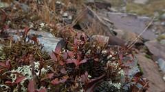 Pfannspitze/Hhenweg (inge.sader) Tags: trekking landscape herbst natur val landschaft alto trentino sdtirol brixen bressanone adige plose eisacktal isarco