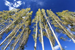 Trees at Hunder , Nubra Valley , Leh Laddakh (Launso) Tags: trees snow mountains colors speed amazing solitude driving awesome hills adventure loops valley toyota wallpapers tso plains mori himalayas pangong fortuner wowo pangongtso laddakh nubra ghata
