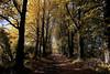 Autumn Lane, Donadea, Co kildare, Ireland. (2c..) Tags: road autumn trees ireland tree forest © lime avenue 2c donadea