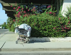 October 14, 2014 (15) (gaymay) Tags: california gay love happy desert palmsprings shoppingcart triad