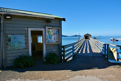 French Pass Wharf, Marlborough Sounds, NZ (flyingkiwigirl) Tags: french island pass wharf marlborough sounds frenchpass durville