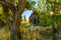Hidden in Trees (KPortin) Tags: trees house abandoned sunstar