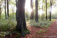 Lichtblick (grafenhans) Tags: sonnenuntergang sony laub landschaft wald rx lichtung rx100 grafenwald