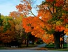 Fall in all it's glory - Lincoln Highway -  Franklin Grove IL (Meridith112) Tags: autumn light shadow orange tree fall leaves leaf illinois nikon october il leecounty 2014 lincolnhighway treeleaves hugetree fallscene franklingrove nikon2485 nikond7000