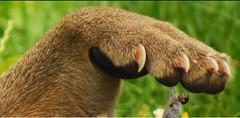 1415 (Ailur Kyodaina) Tags: feet toe squish stomp crush soles trample vore