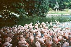 Zoo (Luw G) Tags: palmyre