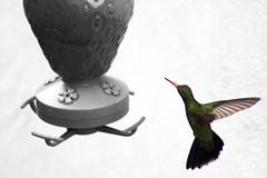 Congelando el Vuelo (Jos Ramn de Lothlrien) Tags: bird birds fly jr ave pico alas miel pajaro dulce comedero plumas fresa volador producciones jarabe congelado colib