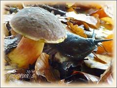 Forest Floor (Heidrun`s Bork&Blatt) Tags: autumn fall mushroom leaves snail forestfloor