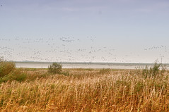 migratory birds in the North Sea