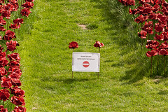 Blood Swept Lands and Seas of Red. (crazee1ady) Tags: red london tower blood poppies lands swept seas