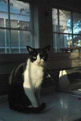 Idaho laundry room (rootcrop54) Tags: male cat room idaho tuxedo laundry kitteh masked 猫 macska gatto katzen kot kočka kedi katt kissa köttur mačka kucing cowcat oddeyed heterochromia кошка 고양이 katė γάτα maček kaķis pisică gorbe
