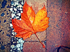 Autumn Leaf (Anonymousx20) Tags: life road park camera trip november original autumn red orange brown white black cold color green fall love halloween nature wet colors beautiful beauty leaves sunshine rain weather yellow season walking fun leaf amazing cool october rocks colorful pretty day natural bright sweet pavement path weekend live sony windy sunny pebbles follow adventure rainy nofilter picoftheday naturelover autumnweather