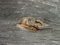 September 20th, 2014 (Around the Bonfire) Tags: wood pine knotty barnboard