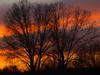 rare sunset (javituero) Tags: trees sunset landscape atardecer olympus puesta sunandclouds finegold supersix e410 blinkagain