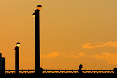 Sunset over State (Andy Marfia) Tags: street bridge sunset sky orange chicago yellow clouds lights glow loop iso400 pedestrian statest 70300mm f8 12500sec d7100