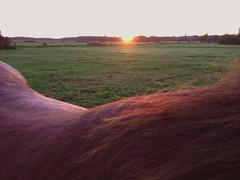 Umour (Gypsy Cob) Tags: horses horse cheval ledefrance 500views 500 77 iledefrance each equine chevaux drafthorse seineetmarne ceffylau trait umour eich heavyhorse capall trekpaard chevaldetrait equinephotography over500views ardennais zugpferd capaill kezeg equinephotographer traitardennais iphone4s umourdelavue