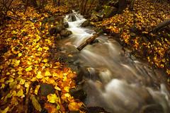 In the backyard.. (Trond Strmme) Tags: fall water leaves oslo river stream 8mm bjerke samyang rvoll isdammen samyang8mmf35fisheye