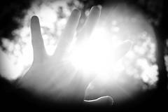 sudden brightness (andymudrak) Tags: bw sunlight morninglight hand bright awakening surprise squint lightplay flickrfriday handlinglight