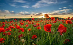 Never forgotten (Christopher Pope Photography) Tags: blue landscape war hero poppy poppies ww2 fields ww1 remembrance troops heros