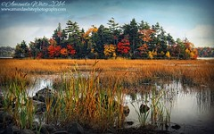 Falls Island (sminky_pinky100 (In and Out)) Tags: park autumn trees red lake canada green fall water yellow reeds landscape island pretty novascotia scenic textures colourful shubiepark omot cans2s exhibitionoftalent masterclassexhibition masterclasselite