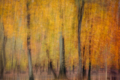 Autumn in the Rain at Tyler State Park - Explored!  Thank you very much! (susan3032) Tags: autumn abstract fall rain yellow odc tylerstatepark 2014inphotos 2014inoctober