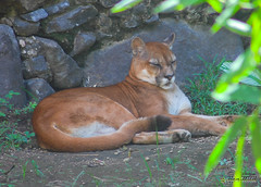Martinique - Zoo du Carbet (Ben.2BR) Tags: zoo martinique carbet fwi lecarbet 201410mebt