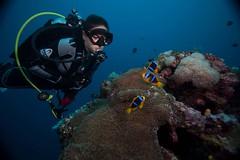 Fiji_Diving_5650