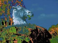 Edy's Horses Head (maginoz1) Tags: horse canon spring oct australia vic edy 2014 g16 bulla