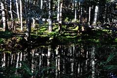 Morning Reflections (Insearchoflight) Tags: reflections morninglight naturephotography insearchoflight nikonist trailfinds waynenorman reflectingonmorningreflections