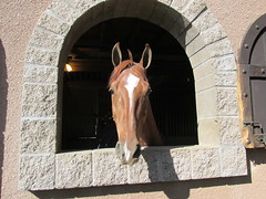 LosCedrosHorse (Nancy D. Brown) Tags: arizona horse scottsdale loscedros