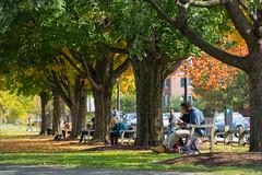 Celebrating the Colorful Season (Dartmouth Flickr) Tags: autumn fall students foliage dartmouth thegreen