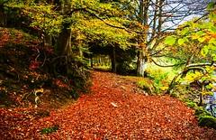 Autumn colours (karllaundon) Tags: autumn orange brown tree green leaves countryside nikon bright walk falling laid