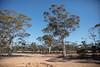 447A7687 (nathankdavis) Tags: nullarbor southaustralia westernaustralia roadtrip road house australia bight ocean nature seascape explore plains desert landscape perth melbourne highway kangaroo vic wa travel open
