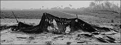 Windblown Fabric Fence #6 (mueflickr) Tags: 4540 aperture borderfx fenceseries hasselblad monochrome nikonsupersc9000 panorama portra160 tijuanarivervalleyagriculture xpanii